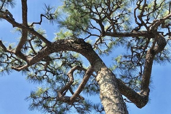 針葉樹の木材