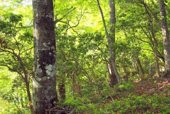 広葉樹の木材